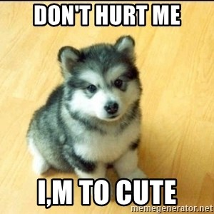 Baby Courage Wolf - Don't Hurt me I,m to cute