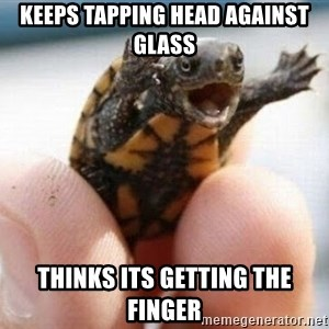 angry turtle - Keeps tapping head against glass Thinks its getting the finger