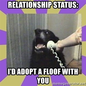 Yes, this is dog! - Relationship STATUS: I'd Adopt A Floof With You
