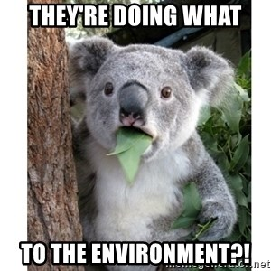 surprised koala - They're doing what to the environment?!