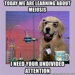 Dog Scientist - Today we are learning about meiosis I need your undivided attention