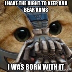 bane cat - I have the right to keep and bear arms I was born with it