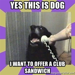 Yes, this is dog! - YES THIS IS DOG I WANT TO OFFER A CLUB SANDWICH