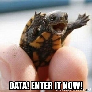 angry turtle - Data! Enter it now!