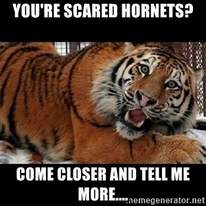Sarcasm Tiger - you're scared hornets? come closer and tell me more....