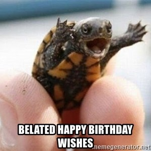 angry turtle - Belated Happy Birthday wishes