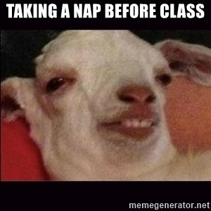 10 goat - Taking a nap before class