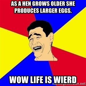 journalist - As a hen grows older she produces larger eggs. wow life is wierd