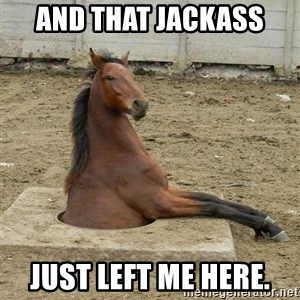Hole Horse - and that jackass just left me here.