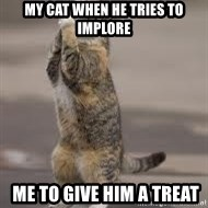 Begging Cat - my cat when he tries to implore  me to give him a treat