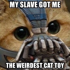 bane cat - my slave got me the weirdest cat toy