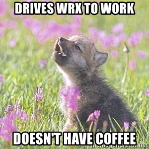 Baby Insanity Wolf - drives wrx to work doesn't have coffee