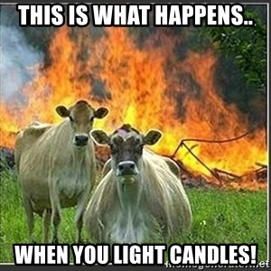 Evil Cows - This is what happens.. When you light candles!