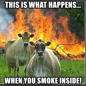 Evil Cows - This is what happens... when you smoke inside!