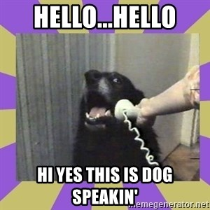 Yes, this is dog! - hello...hello hi yes this is dog speakin'