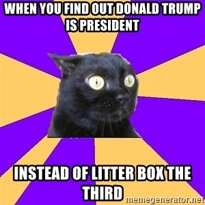 Anxiety Cat - when you find out donald trump is president instead of litter box the third