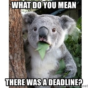 surprised koala - What do you mean THERE WAS A DEADLINE?