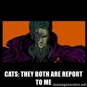 All your base are belong to us - cats: They BOTH are report to me