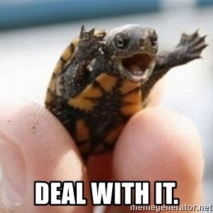 angry turtle - DEAL WITH IT.