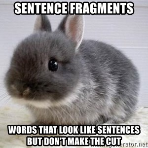 ADHD Bunny - SENTENCE Fragments Words that look like sentences but don't make the cut