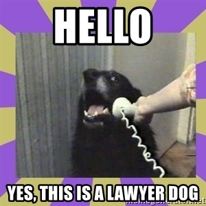 Yes, this is dog! - Hello Yes, this Is a lawyer dog
