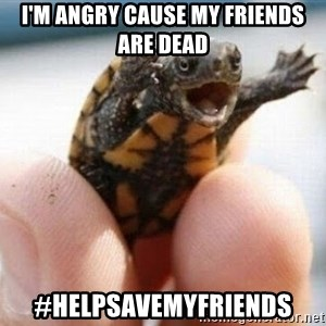 angry turtle - I'm angry cause my FRiends are dead  #Helpsavemyfriends
