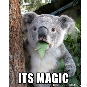 surprised koala - its magic