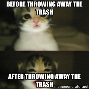 Adorable Kitten - Before throwing away the trash after throwing away the trash
