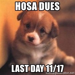 cute puppy - Hosa Dues last day 11/17