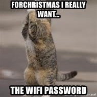 Begging Cat - forchristmas i really want... the wifi password