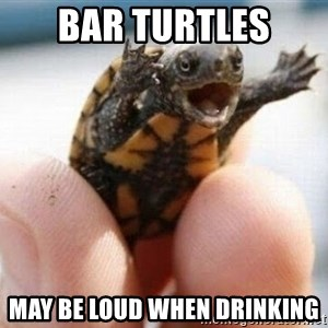 angry turtle - Bar turtles May be loud when drinking