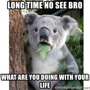 surprised koala - long tıme no see bro what are you doıng wıth your lıfe