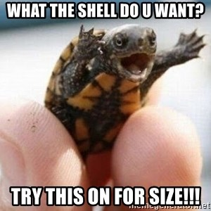 angry turtle - WHAT THE SHELL DO U WANT? TRY THIS ON FOR SIZE!!!
