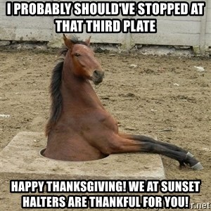 Hole Horse - I probably should've stopped at that third plate  Happy Thanksgiving! We at Sunset Halters are thankful for YOU!