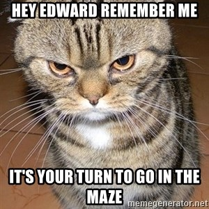 angry cat 2 - Hey Edward remember me It's your turn to go in the maze
