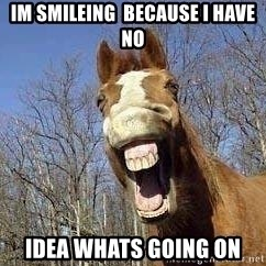 Horse - im smileing  because i have no idea whats going on