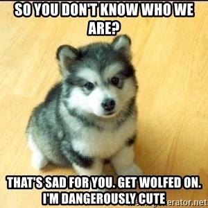 Baby Courage Wolf - So you don't know who we are? That's sad for you. GEt Wolfed On. I'm Dangerously Cute
