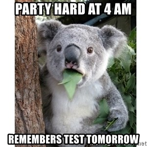 surprised koala - party hard at 4 am remembers test tomorrow