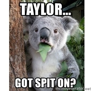 surprised koala - Taylor... Got spit on?