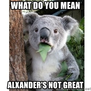 surprised koala - what do you mean  alxander's not great