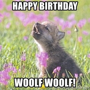 Baby Insanity Wolf - Happy Birthday  Woolf woolf!