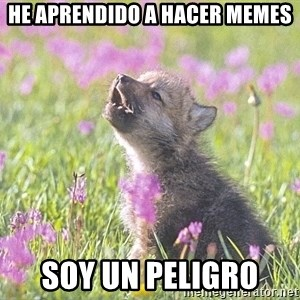 Baby Insanity Wolf - he aprendido a hacer memes soy un peligro