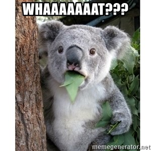 surprised koala - whaaaaaaat???