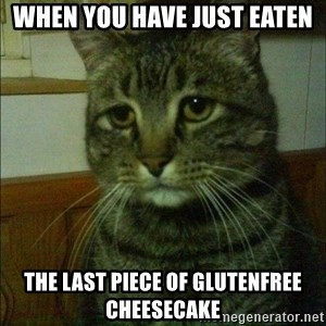 Depressed cat 2 - When you have just eaten The last piece of Glutenfree cheesecake