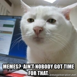 Serious Cat - Memes?  AIN'T NOBODY got time for that.