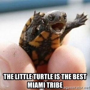 angry turtle - the little turtle is the best Miami tribe