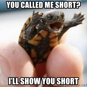 angry turtle - You called me short? I'll show you short