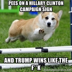 Ridiculously Photogenic Corgi  - pees on a hillary clinton campaign sign and trump wins like the f**k