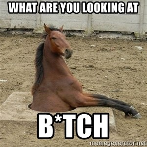 Hole Horse - What are you looking at B*tch