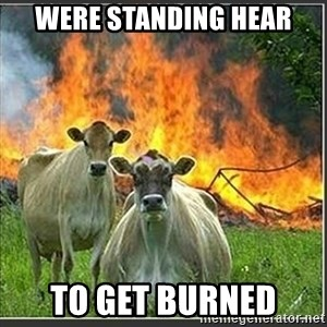 Evil Cows - were standing hear to get burned